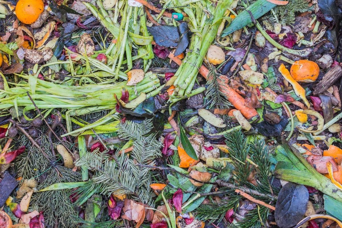 Proprietà Cenere Di Legna concime organico: 10 fertilizzanti naturali per il tuo orto
