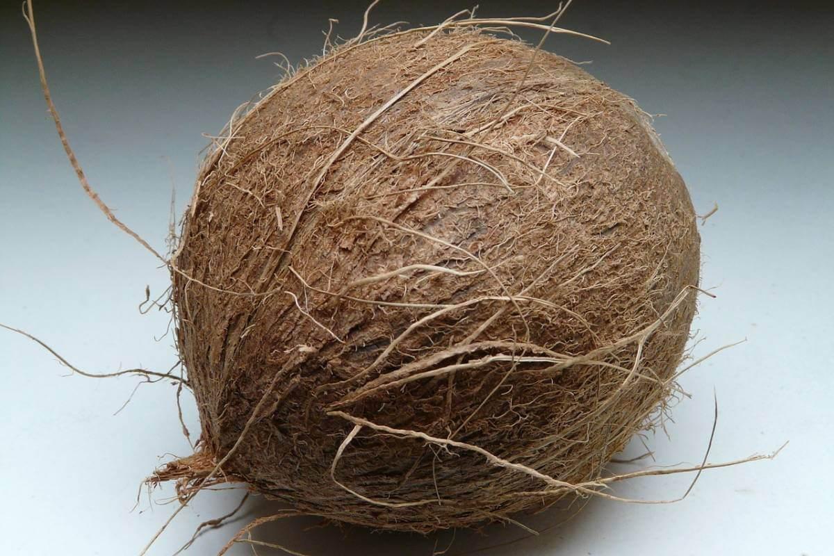 Fibra di cocco per casa
