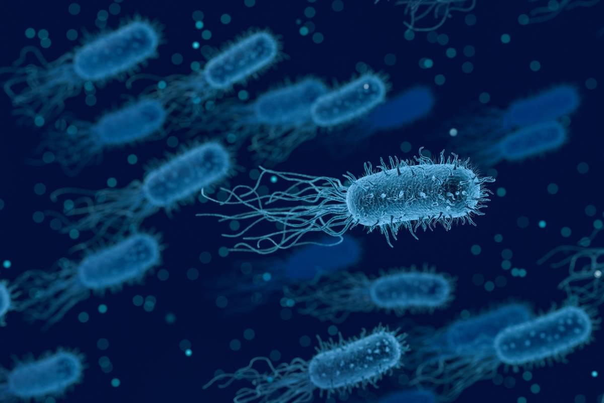 Legionella nell'acqua