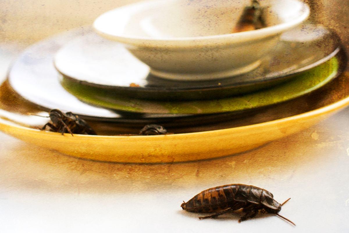scarafaggi in casa